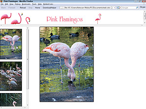 pink flamingos in frames